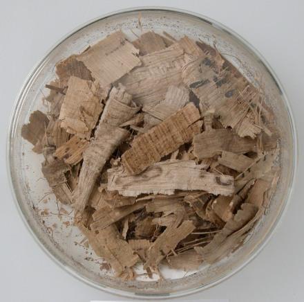 Papyri Fragments (Coptic, Met Museum)