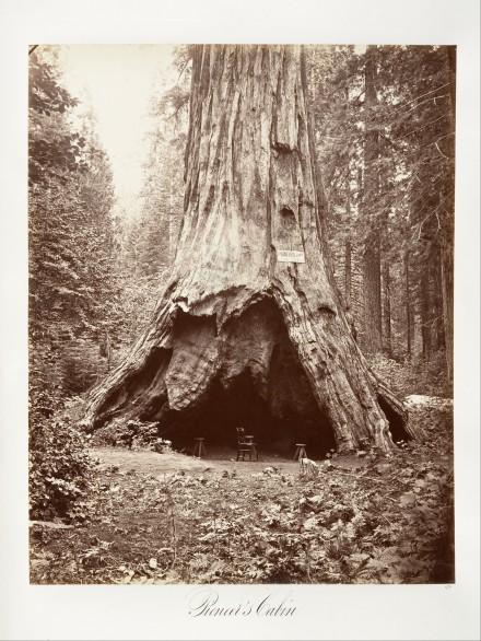 Pioneer's Cabin (Watkins, Carleton E.)